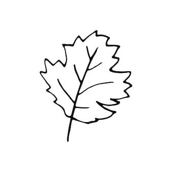 Feuille dessinée à une main pour la décoration d'hiver et d'automne. illustration vectorielle de griffonnage. isolé sur fond blanc