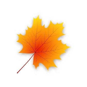 Feuille d'érable d'automne isolé sur fond blanc.