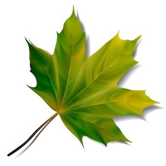Feuille d'érable verte sur fond blanc. illustration eps10