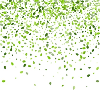 Feuille herbeuse tombant vert écologie contexte