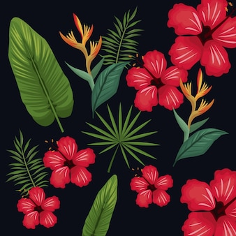 Feuille d'hibiscus palm tropical