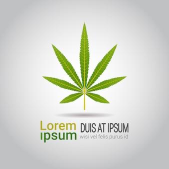 Feuille de marijuana médicale cbd huile étiquette thc icône gratuite extrait de chanvre emblème ganja cannabis weed drogue consommation concept copie espace plat