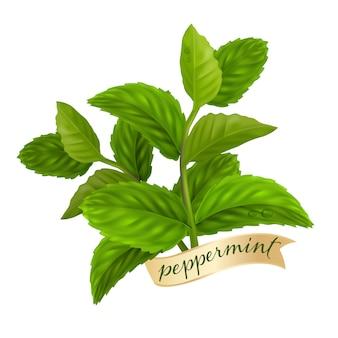 Feuille de menthe poivrée, huile essentielle nature