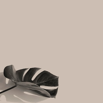 Feuille de monstera sur une ressource de conception de fond beige