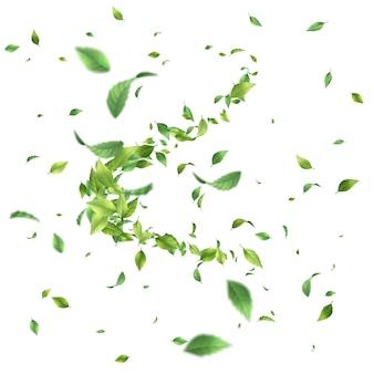 Feuille tourbillonnant au vent. feuilles vertes en mouvement sur fond blanc