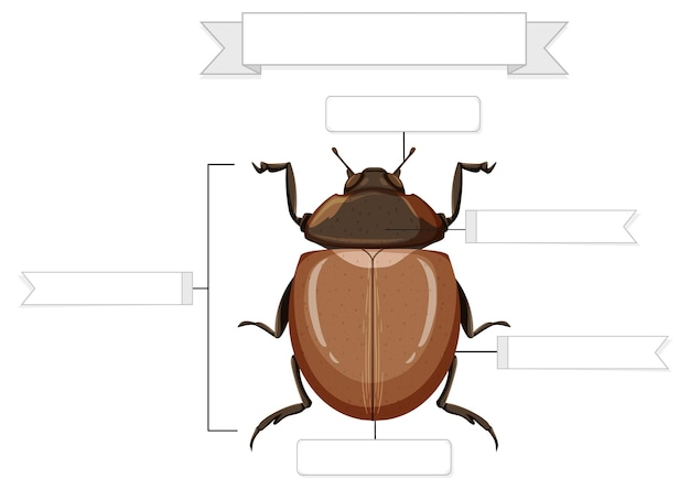 Feuille de travail sur l'anatomie externe d'un coléoptère