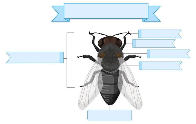 Feuille de travail anatomie externe d'une mouche