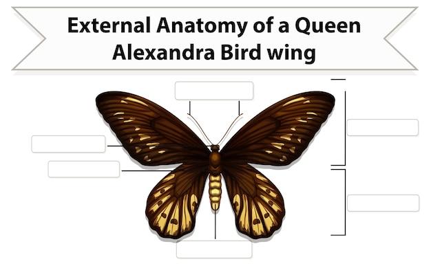 Feuille de travail anatomie externe d'un papillon