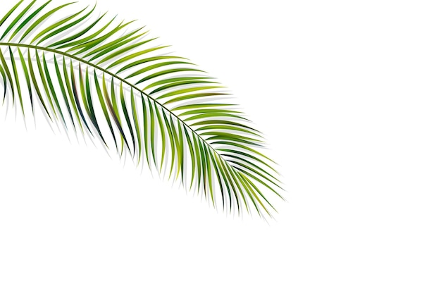 Feuille verte de vecteur de palmier avec ombre de superposition isolé sur fond blanc