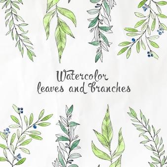 Feuilles aquarelle et branches