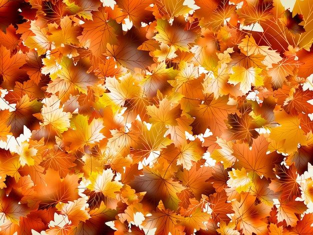 Feuilles d'automne colorées.
