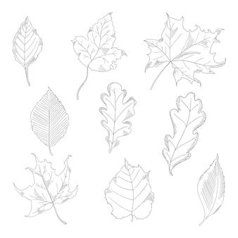 Feuilles d'automne définies dans un style d'esquisse. arbres d'érable et de chêne. illustration vectorielle isolée sur fond blanc