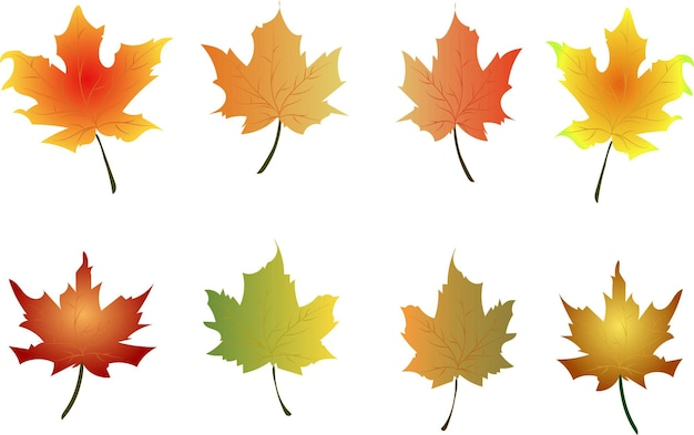 Les feuilles d'automne définissent la conception de vecteur