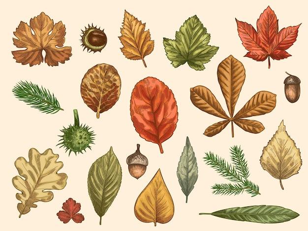 Feuilles d'automne dessinées à la main