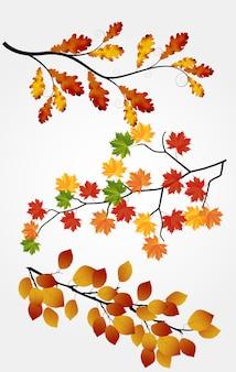 Feuilles d'automne sur fond blanc