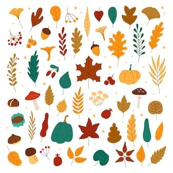 Feuilles d'automne glands châtaignes baies citrouilles champignons feuillage de la forêt d'automne et éléments automnaux