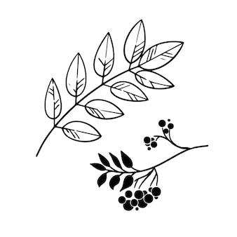 Feuilles d'automne graphiques à l'encre sur blanc. éléments de conception d'automne.