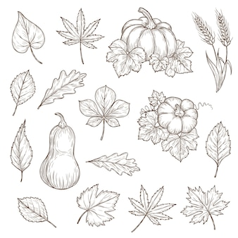 Feuilles d'automne et icônes de croquis de citrouilles