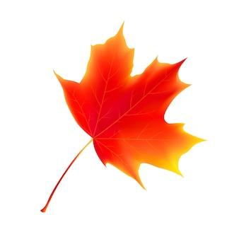 Feuilles d'automne isolés. feuille d'érable.