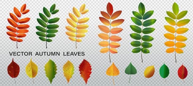 Feuilles d'automne réalistes. feuillage d'automne en bois d'oranger de châtaignier et d'érable. chêne et frêne, tilleul, bouleau