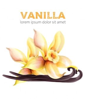 Feuilles et bâtons d'aquarelle à la vanille