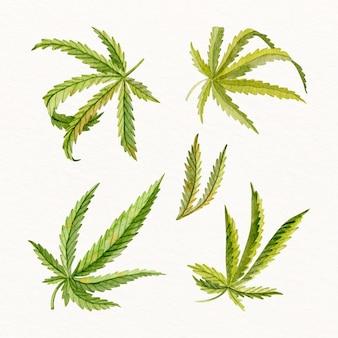 Feuilles de cannabis dans un ensemble aquarelle