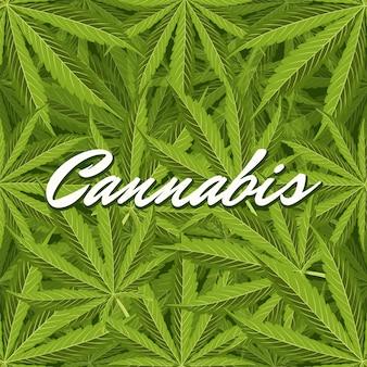 Feuilles de cannabis vertes. composition