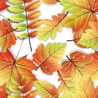 Feuilles colorées d'automne sans soudure isolés sur fond blanc.