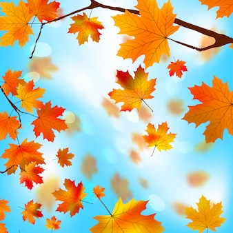 Feuilles d'érable arbre automne contre le bleu