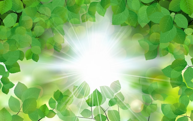 Feuilles d'été feuilles vertes avec des rayons de soleil