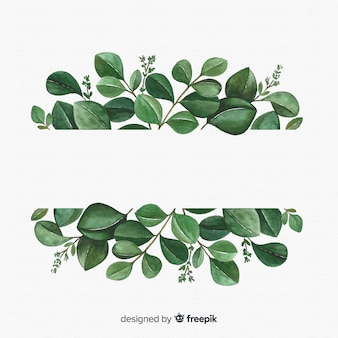 Feuilles d'eucalyptus dessinés à la main