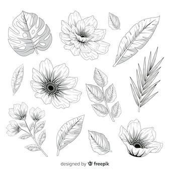 Feuilles et fleurs réalistes dessinées à la main