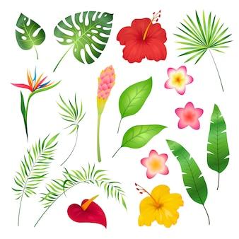 Feuilles et fleurs tropicales. caraïbes fleur tropicale feuille hibiscus orchidée hawaii exotique, jardin jungle image d'été