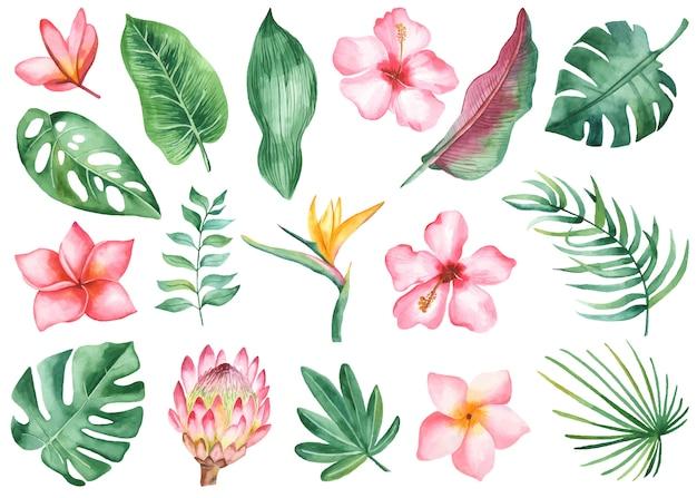 Feuilles Et Fleurs Tropicales Vecteur Premium
