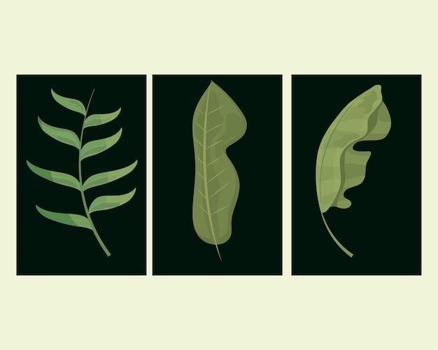 Feuilles flore botanique