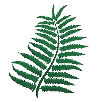Feuilles de fougère verte. illustration vectorielle, isolée sur fond blanc