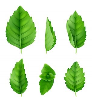 Feuilles de menthe réalistes. closeup menthe verte nature herbes fraîches odeur verte photos