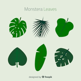 Feuilles de monstera plates