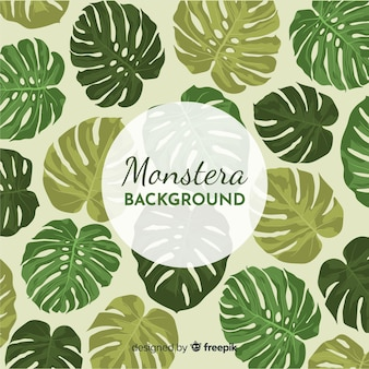 Feuilles de monstera