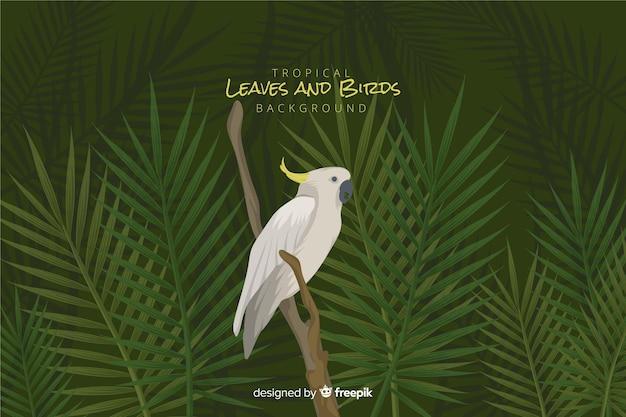 Feuilles et oiseaux tropicaux