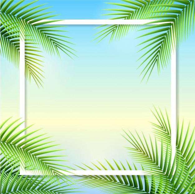 Feuilles de palmier sur fond d'été