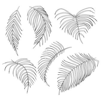 Feuilles de palmier de vecteur, jeu de feuilles de jungle isolé sur fond blanc