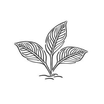 Les feuilles de pousse poussent hors du sol