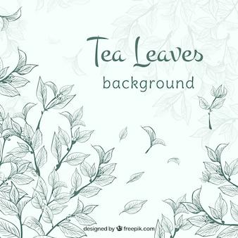 Feuilles de thé fond avec des plantes