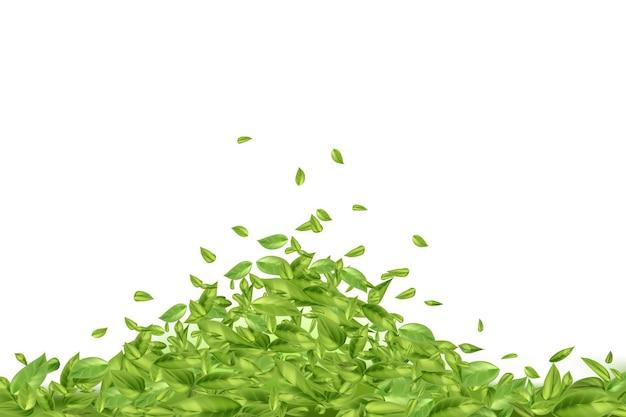 Feuilles de thé ou de menthe volantes ou tombantes sur fond blanc