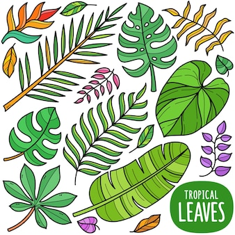 Feuilles tropicales éléments graphiques vectoriels colorés et illustrations de griffonnage