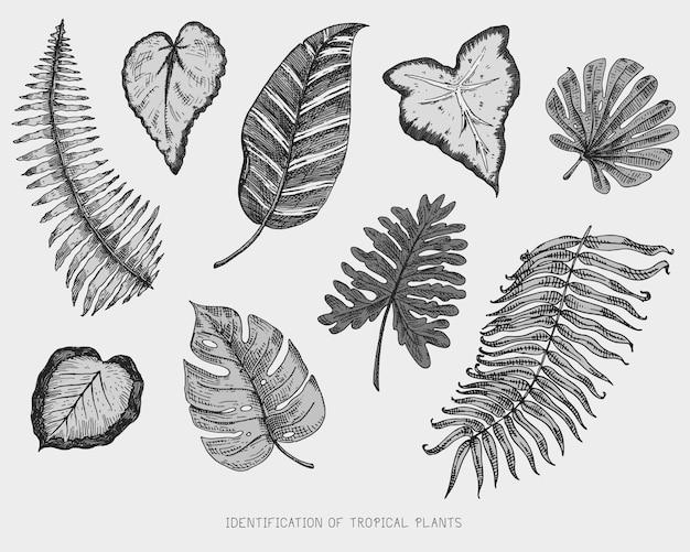 Feuilles tropicales ou exotiques gravées, dessinées à la main, feuilles de différentes plantes à l'aspect vintage
