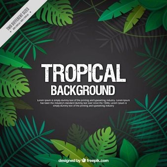 Feuilles tropicales fond