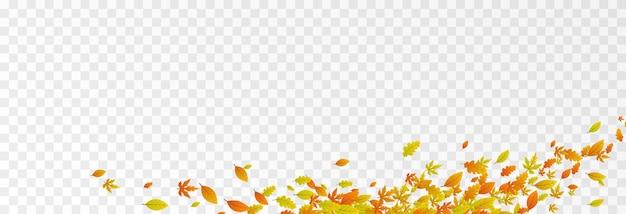 Feuilles de vecteur sur fond transparent isolé le vent souffle les feuilles le vent souffle