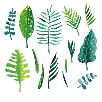 Les feuilles vertes colletion
